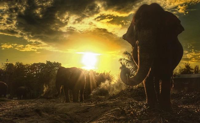 Huahin Elephant Village หมู่บ้านช้างหัวหิน